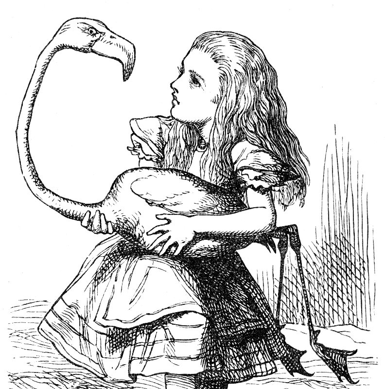 Alice and the Flamingo wondering what to do next